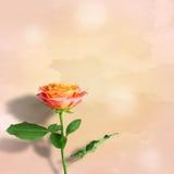 Bella Rosa dentellare illustrazione vettoriale