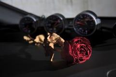 bella rosa rossa asciutta sulla console dell'automobile sportiva Immagini Stock