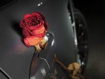 bella rosa rossa asciutta sulla maniglia dell'automobile sportiva Fotografia Stock