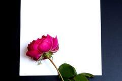 Bella rosa rossa e un foglio di carta bianco in bianco Fotografia Stock