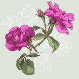 Bella Rose Background senza cuciture Fotografie Stock Libere da Diritti