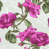 Bella Rose Background senza cuciture Fotografie Stock