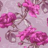 Bella Rose Background senza cuciture Immagini Stock