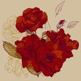 Bella Rose Background senza cuciture Fotografia Stock Libera da Diritti