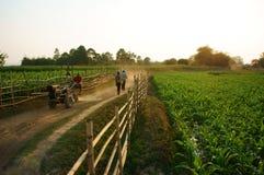 Bella scena con il percorso, recinto di legno, campo di verdure verde Immagini Stock Libere da Diritti