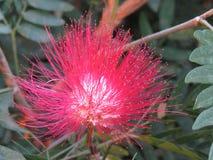 Bella scena del fiore nella foresta immagine stock