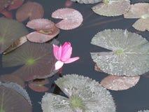 Bella scena del fiore nella foresta fotografia stock libera da diritti