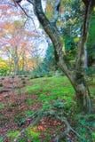 Bella scena del giardino Immagine Stock