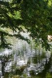 Bella scena del parco con prato inglese, gli alberi ed acqua immagini stock