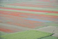 Bella scena della campagna, fioritura astratta Fotografie Stock