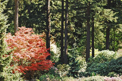 Bella scena della foresta al parco di Weyerhaeuser Fotografie Stock