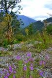 Bella scena della montagna fotografie stock libere da diritti