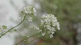 Bella scena della natura con il fiore di fioritura video d archivio