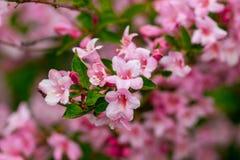 Bella scena della natura con l'albero di fioritura Piovuto appena sopra Sprin Fotografia Stock Libera da Diritti
