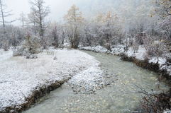 Bella scena della neve Immagini Stock Libere da Diritti