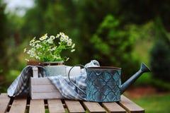 Bella scena di estate con il mazzo dei fiori della camomilla, del vassoio di legno rustico e della tovaglia con fondo verde Fotografia Stock