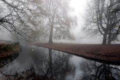 Bella scena di una foresta nebbiosa Fotografia Stock