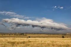 Bella scena rurale con i campi ed alberi dorati e belle nuvole bianche Fotografia Stock