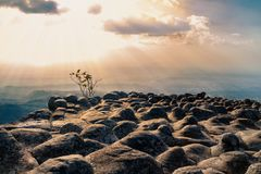 Bella scogliera di pietra al tramonto con il backgro della montagna e della foresta Immagini Stock