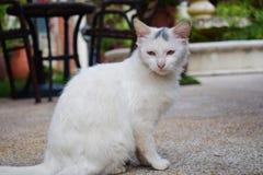 Bella seduta bianca sveglia del gatto, nuova foto 2018 fotografie stock