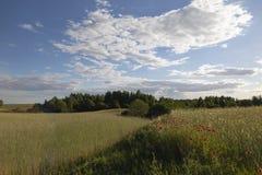 Bella sera di estate, grano e campi dei papaveri immagine stock libera da diritti