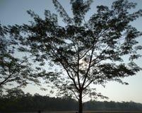Bella siluetta dell'albero fotografia stock