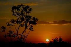 Bella siluetta di tramonto di un albero Immagini Stock Libere da Diritti
