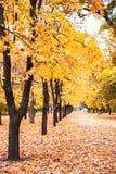 Bella sosta di autunno Fotografia Stock