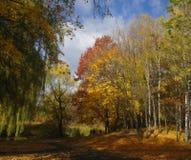 Bella sosta di autunno Fotografia Stock Libera da Diritti