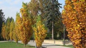 Bella sosta di autunno alberi dei fogli di autunno Autumn Landscape Parco in autunno video d archivio