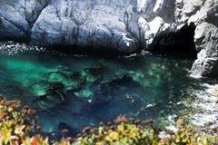Bella spiaggia, Big Sur immagini stock