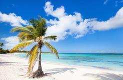 Bella spiaggia caraibica Fotografia Stock