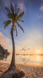 Bella spiaggia con l'albero del cocco Fotografia Stock