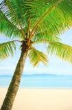 Bella spiaggia con la palma sopra la sabbia Fotografie Stock