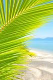Bella spiaggia con la palma sopra la sabbia Fotografia Stock