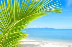 Bella spiaggia con la palma sopra la sabbia Fotografia Stock Libera da Diritti