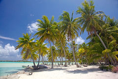 Bella spiaggia di Bora Bora, Polinesia francese, Pacifico Meridionale fotografia stock libera da diritti