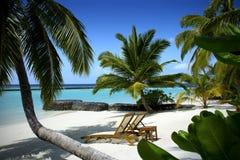 Bella spiaggia in Maldive Fotografia Stock