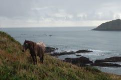 Bella spiaggia nel Devon del sud Immagini Stock