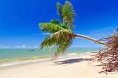 Bella spiaggia tropicale con l'albero del cocco Fotografia Stock Libera da Diritti