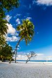Bella spiaggia tropicale, Maldive Fotografie Stock