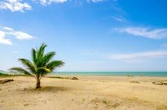 Bella spiaggia tropicale nella costa dell'Ecuador Fotografia Stock Libera da Diritti