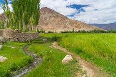 Bella stagione del verde nella città di Leh, Ladakh, India Fotografia Stock Libera da Diritti