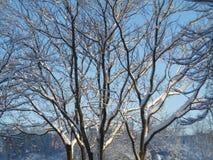 Bella stagione invernale Fotografia Stock Libera da Diritti