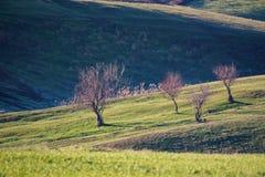 Bella steppa della molla con il paesaggio nudo degli alberi immagini stock libere da diritti