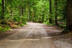 Bella strada campestre che funziona lungo una foresta immagine stock