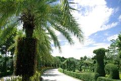 Bella strada con gli alberi Immagini Stock Libere da Diritti