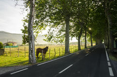 Bella strada della campagna Fotografie Stock