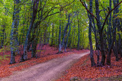 Bella strada della montagna della campagna nella foresta di autunno immagini stock