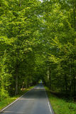 Bella strada in mezzo agli alberi verdi immagine stock libera da diritti